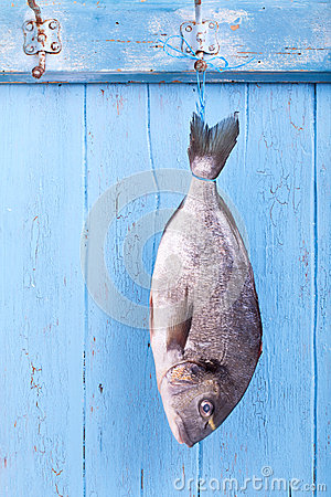 Fresh sea bream is hanging headlong on a hook