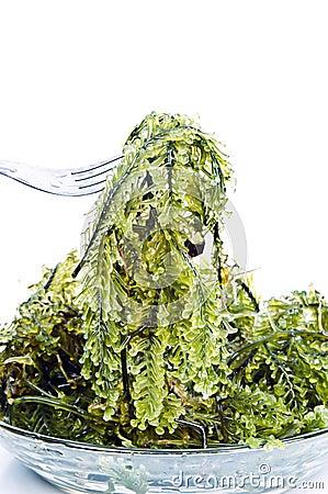 Fresh seaweed