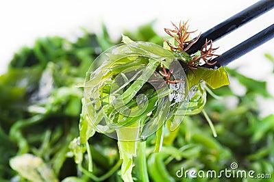 Fresh seaween