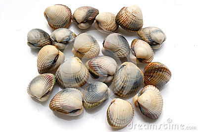 Fresh shells, cerastoderma edule