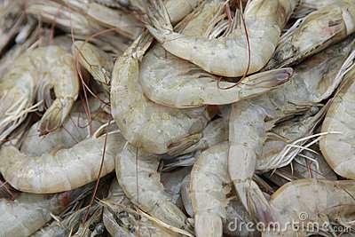 Fresh shrimp