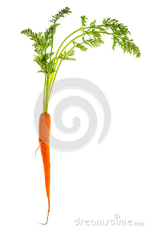 Fresh single carrot isolated on white