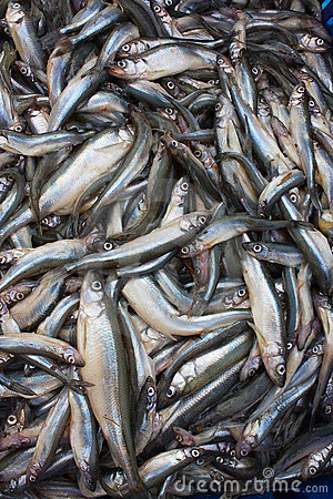 Fresh smelt fish