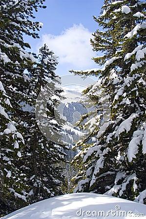Free Fresh Snow Stock Photos - 6653053