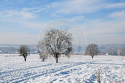 Fresh snow on plowed land