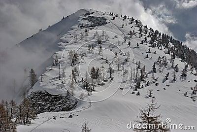 Fresh snow trail