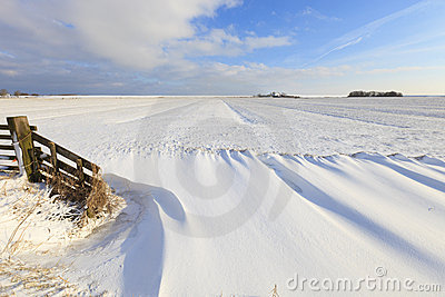 Fresh snow in winter in a field