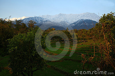 Fresh snowfall  and green fields of Kangra India