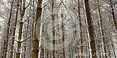 Fresh snowfall in Illinois