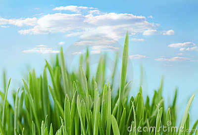 Fresh spring bokeh abstract background