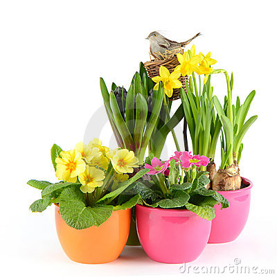 Fresh spring flowers. easter decoration