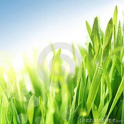 Free Fresh Spring Grass Royalty Free Stock Photography - 17917197