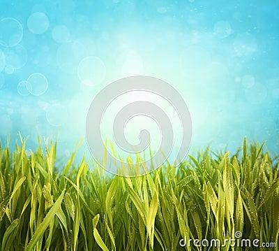 Fresh spring grass with blue sky
