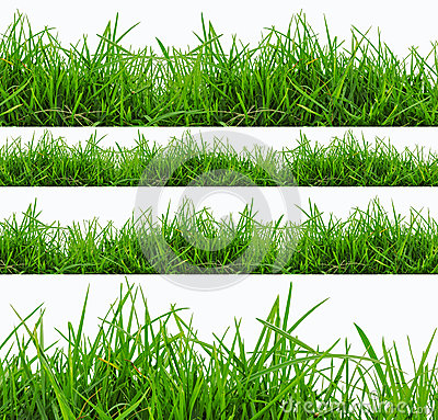 Free Fresh Spring Green Grass Panorama Isolated On White Background. Royalty Free Stock Photography - 31379447