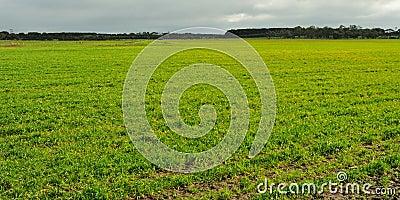 Fresh sprouts on farmland