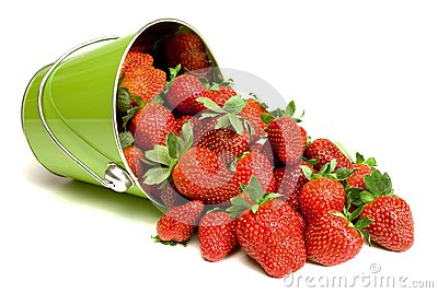 Fresh Strawberries Pouring out of Pail