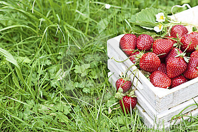 Fresh strawberries in white box