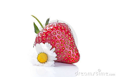 Fresh strawberry and camomile