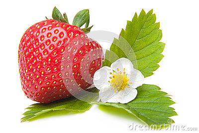 Fresh strawberry with flower on isolated white