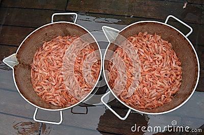 Fresh Striped Pink Shrimp (Pandalus montagui)