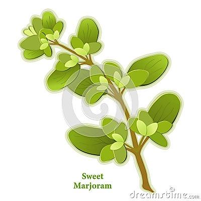 Fresh Sweet Marjoram Herb