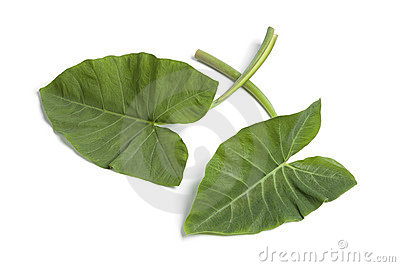 Fresh Taro leaves