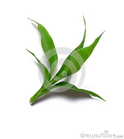 Free Fresh Tea Leaves Royalty Free Stock Image - 6492046