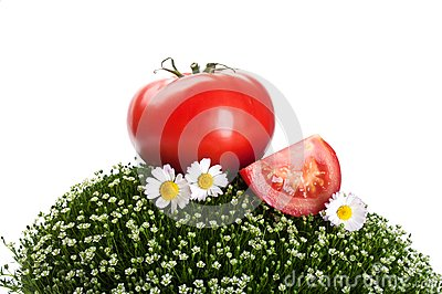 Fresh tomato on a green grass