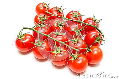 Fresh Tomatoes on the stalk