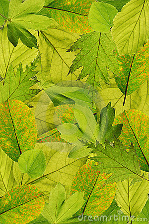 Free Fresh Tree Leaves Background Royalty Free Stock Images - 9225259