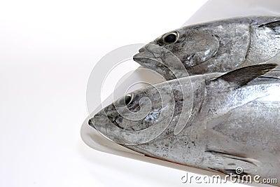 Fresh tunas