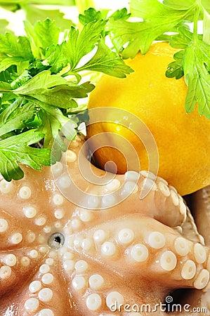 Fresh uncooked octopus