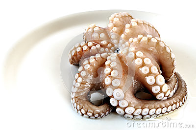 Fresh uncooked octopus in a plate