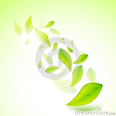 Fresh Vector Leaves