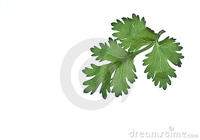 Fresh Vegetable Leaf Stock Photos - Image: 17835103