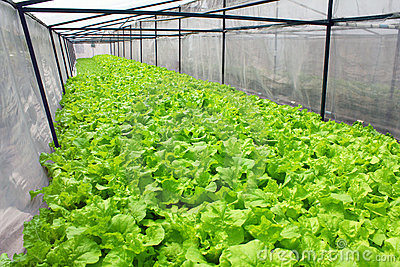 Fresh vegetables in the field simulation