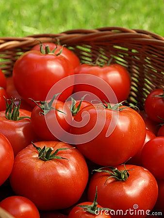 Free Fresh Veggies Stock Photos - 25460443