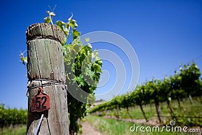Fresh Vines