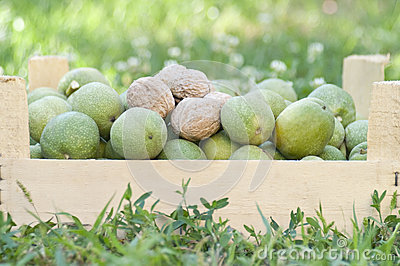 Fresh walnuts in a box, natural background