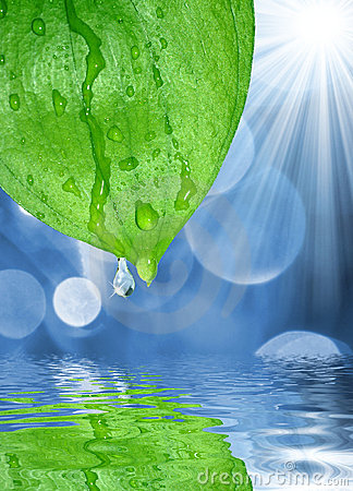 Fresh water drops on green leaves