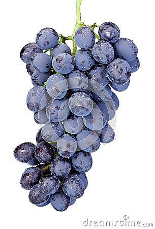 Free Fresh Wet Blue Grapes Isolated On White Background Royalty Free Stock Photo - 51271115