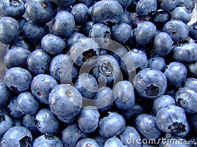 Fresh, Wet, Gleaming Blueberries