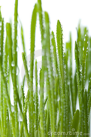 Fresh wet grass background isolated