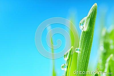 Fresh wet grass after the rain