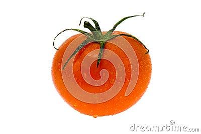 Fresh wet tomato