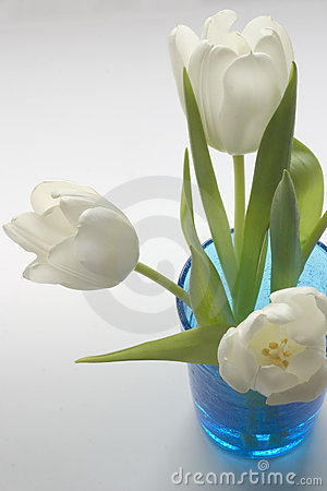 Fresh White Tulips in Blue Glass