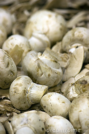 Fresh whole mushrooms