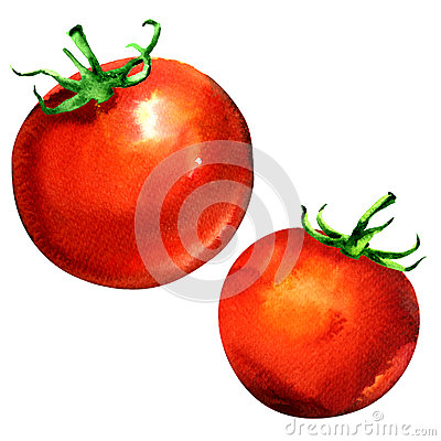 Free Fresh Whole Two Tomatoes Isolated, Red Vegetable, Watercolor Illustration On White Stock Images - 92655384