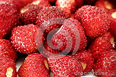 Fresh wild strawberries
