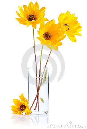 Free Fresh Yellow Flowers In Glass Water Isolated Royalty Free Stock Photos - 25432138
